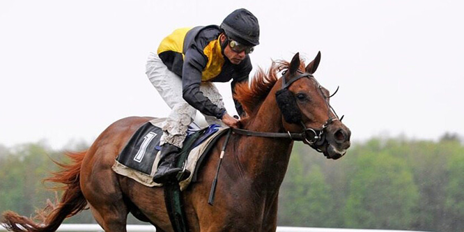 scommettere corse cavalli online
